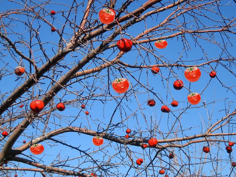 Meat-bearing tree
