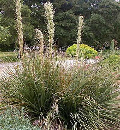 The Hilltop Landscape Architects And Contractors 187 Plants