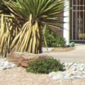 Low maintenance, low-water usage, xeriscape rebate