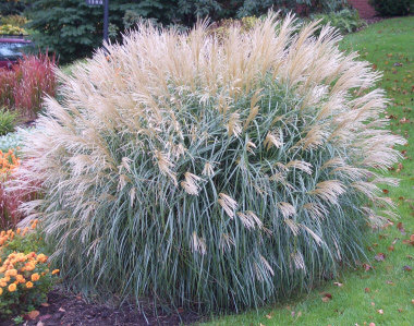 The hilltop landscape architects and contractors plants and trees ornamental grass workwithnaturefo